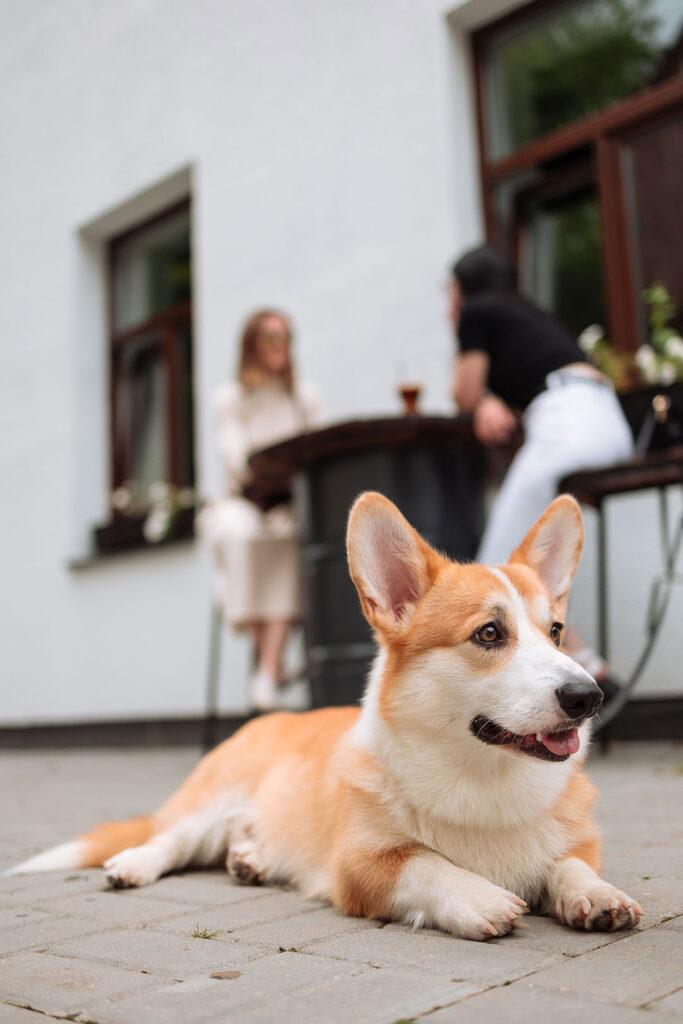 Hundeschule & Hundetraining in München-Sendling