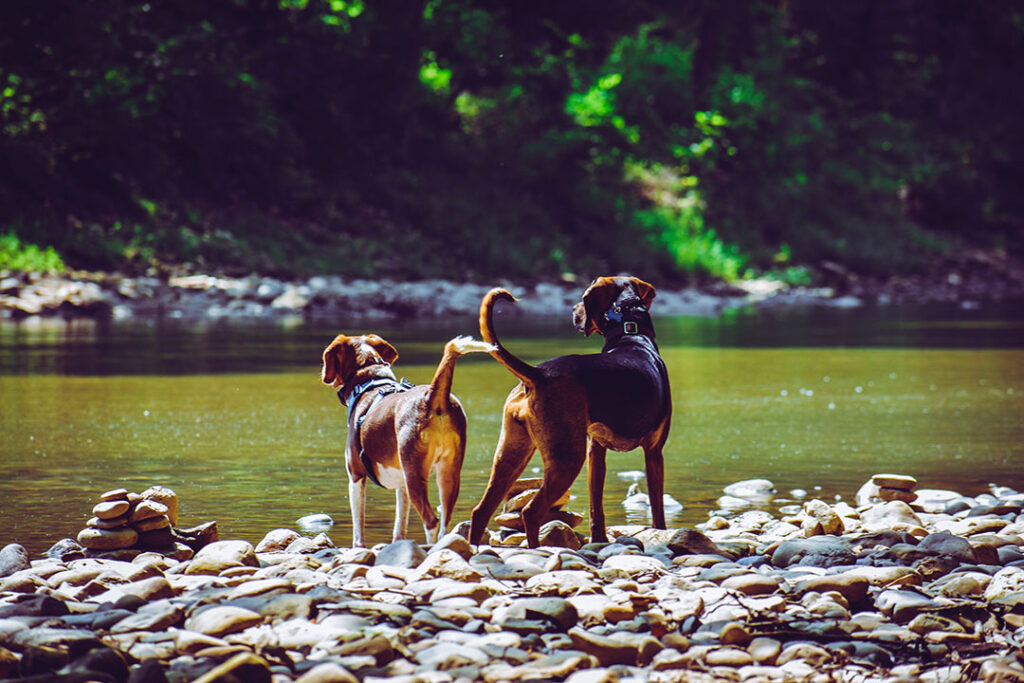 Hundeschule & Hundetraining in München-Thalkirchen